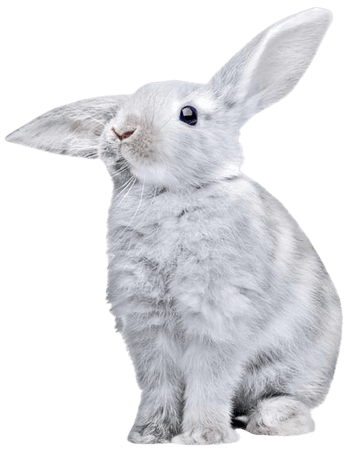 white grey bunny rabbit png filler