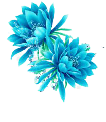 bright blue flower png - Google Search