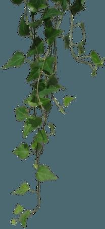 green leaf vine png filler garden mood