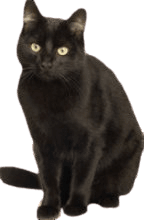 Black Cat Animal image with transparent background