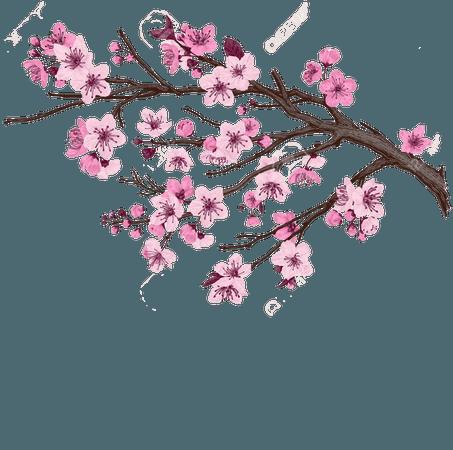 Sakura. Pink Cherry Blossom Branch. Vector Botanical Illustration. Royalty Free Cliparts, Vectors, And Stock Illustration. Image 93216381.