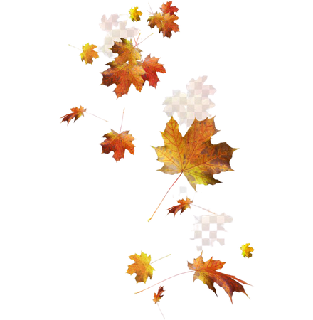 leaves - Google Search