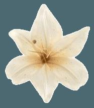 flower filler