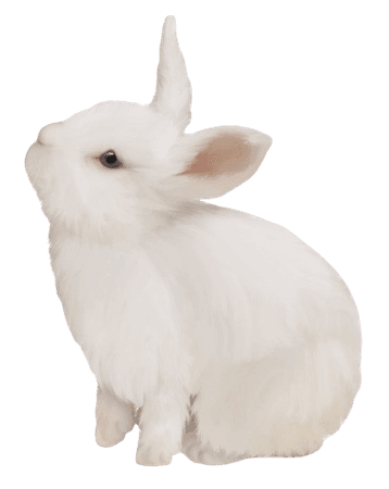 Domestic Rabbit White Rabbit Easter Bunny European Rabbit PNG, Clipart, Animals, Black White, Bunny, Cute, Cute Animals Free PNG Download
