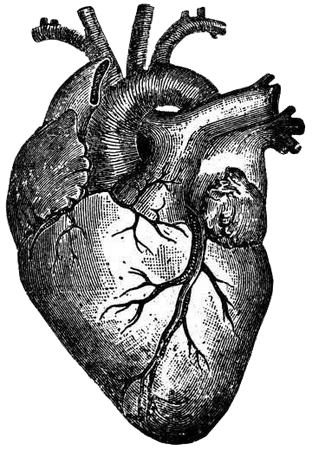 Anatomical Heart Ink-Print