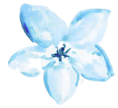 blue flower watercolor png - Google Search