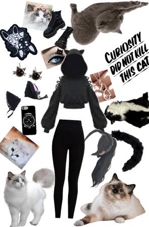 CAT 🐈 🐱