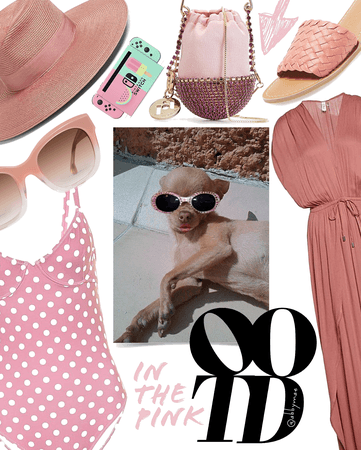 that is a fancy-ass dog | celebrate ootd