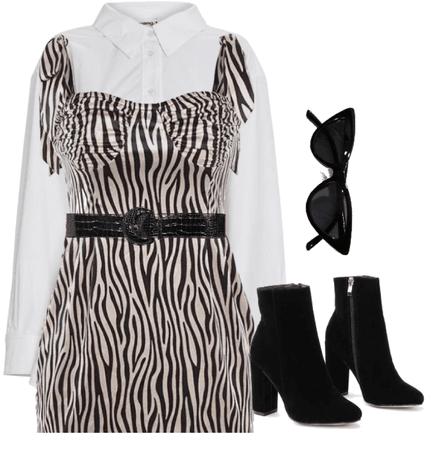 zebra night