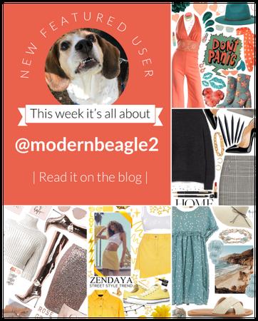 Featured user: @modernbeagle2