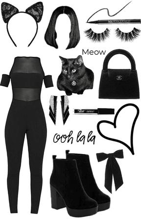 kitty cat 🐱