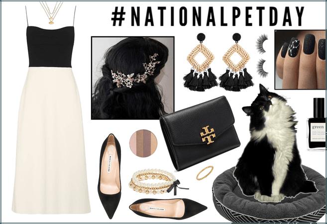 National Pet Day: Tuxedo Cat
