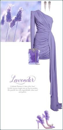 Lavender for spring