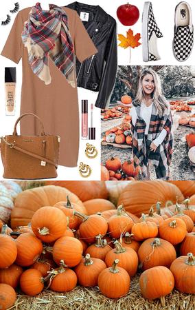 pick a pumpkin 🎃