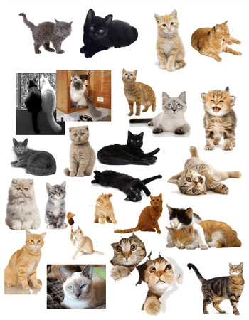 cats - some of them