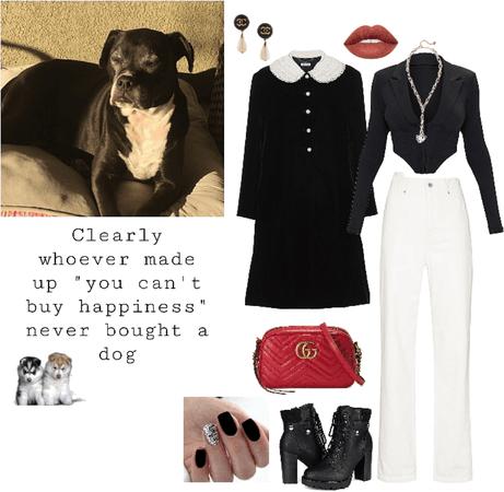 My dog but make it fashion