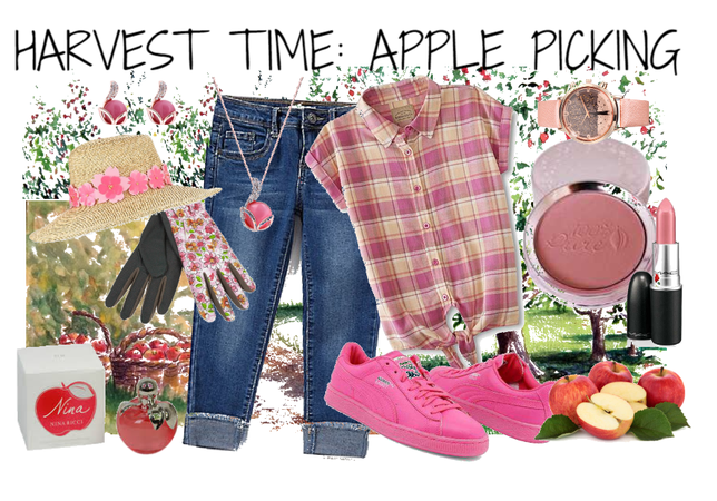 Harvest time: Apple picking