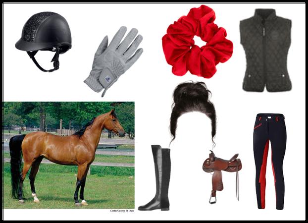 horse gal
