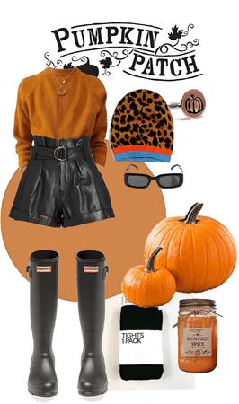 pumpkin patch 🎃 🍂