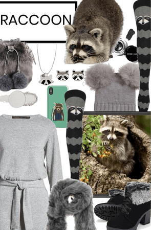 Raccoon 🦝