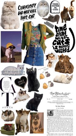 cat lady 🐈 🐈⬛