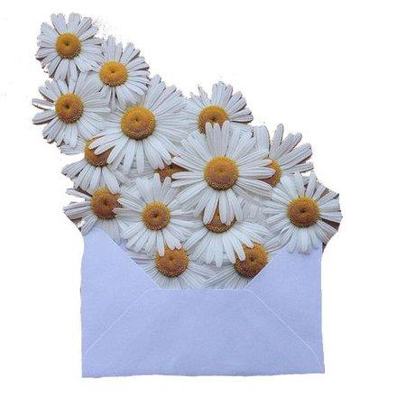 flower envelope png filler moodboard aesthetic