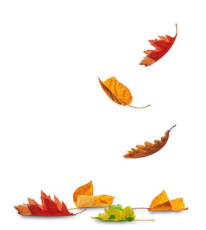 fall leaves images - Google Search