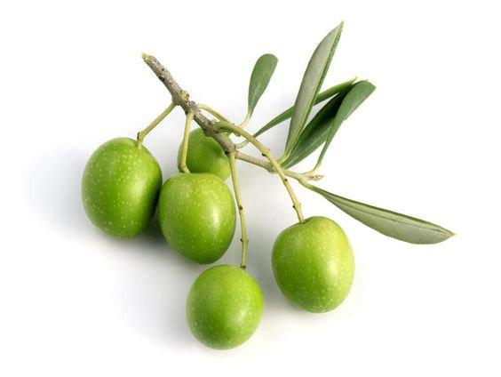 png olive green filler