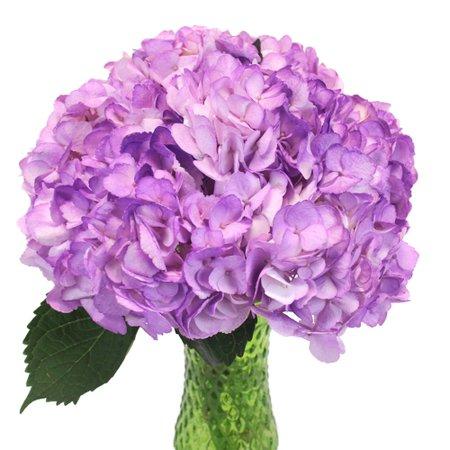 Violet Spray Enhanced Hydrangea | FiftyFlowers.com