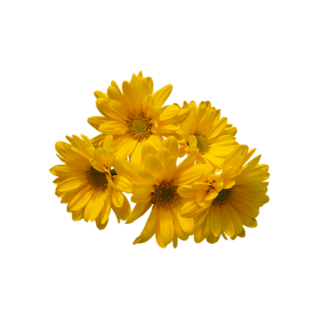 Yellow Aesthetic Flower