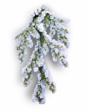 snow covered pine stem