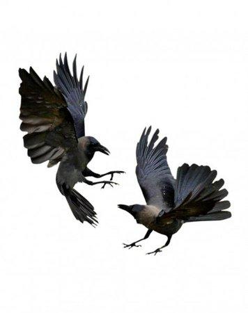 black raven png filler moodboard