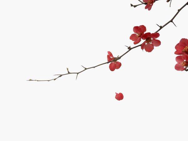 Flower, blossom, branch and tree HD photo by Han Chenxu (@hanchenxu) on Unsplash