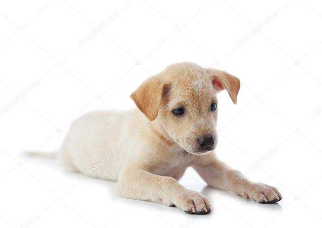 cachorrinho — Fotografias de Stock © WitthayaP #12383394