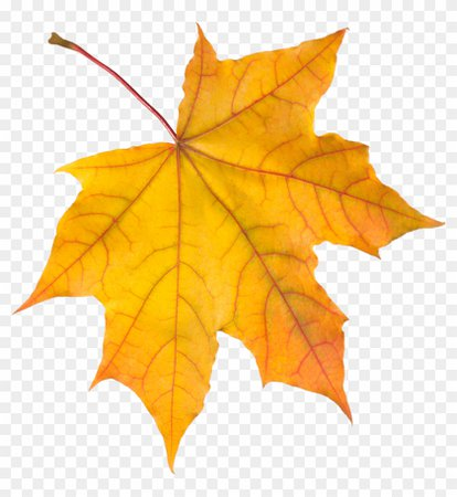 170-1705883_autumn-leaves-png-images-free-yellow-pictures-autumn.png (840×914)