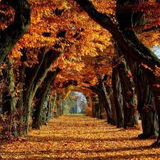 fall background - Google Search