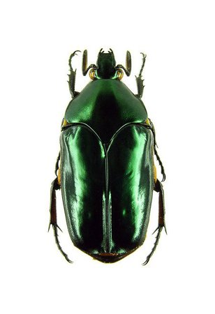 green beetle png filler