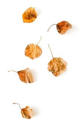 Autumn set with looksbylyla
