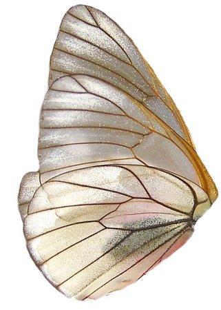 Butterfly/ fairy wing
