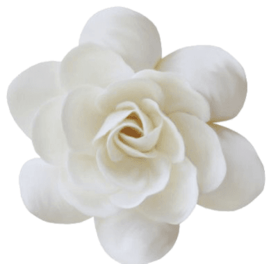 White Flower png