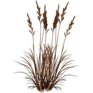 Dry Grass Clipart hay 24 - 300 X 300 | Dumielauxepices.net