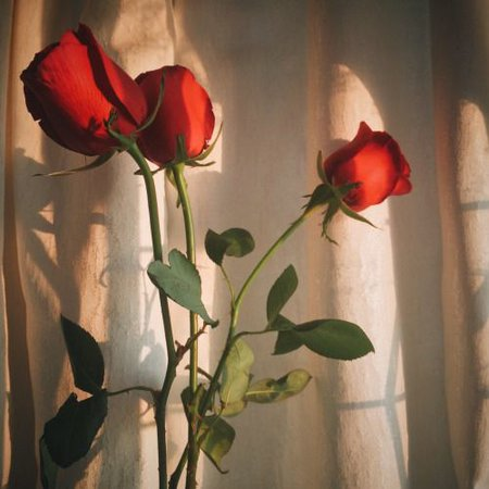 red roses aesthetic image