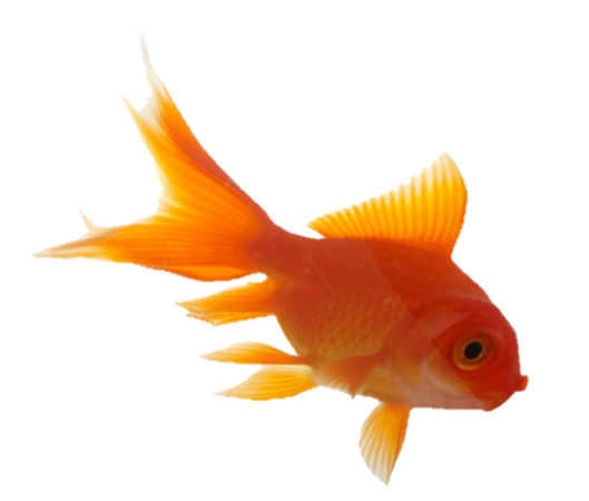 aesthetic tumblr vaporwave goldfish fish orange...