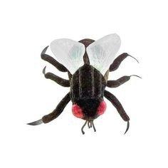 plush invertebrates pinterest