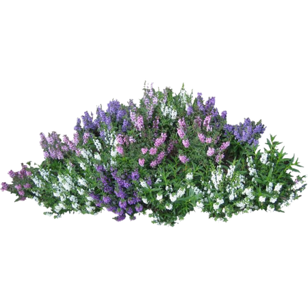 Lavender Garden pngs