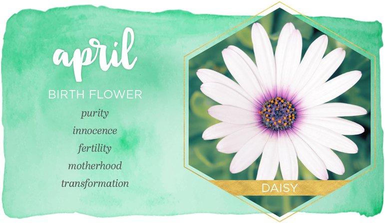 daisy april birth flower - Google Search