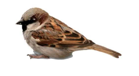 brown bird png filler