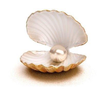 shell png filler white