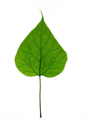green png leaf filler