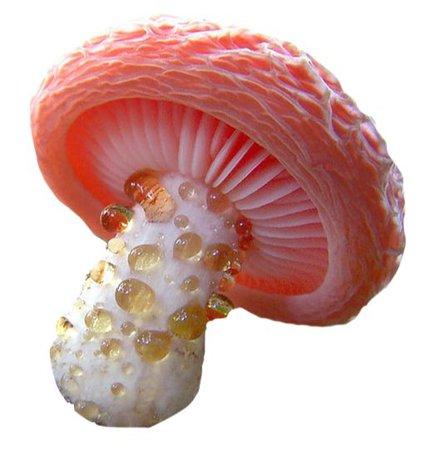 fairytale mushroom png pink filler
